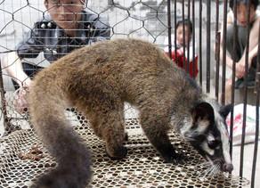 La incesante batalla de Facebook contra la venta ilegal de animales salvajes dentro de la plataforma