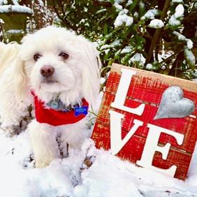 dog in snow.jpg