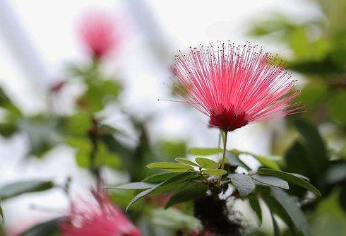 flower from biltmore conservatory .jpg