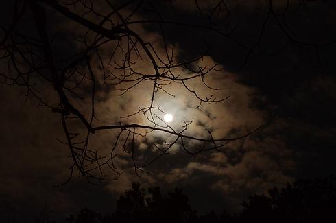 gold moon night .jpg
