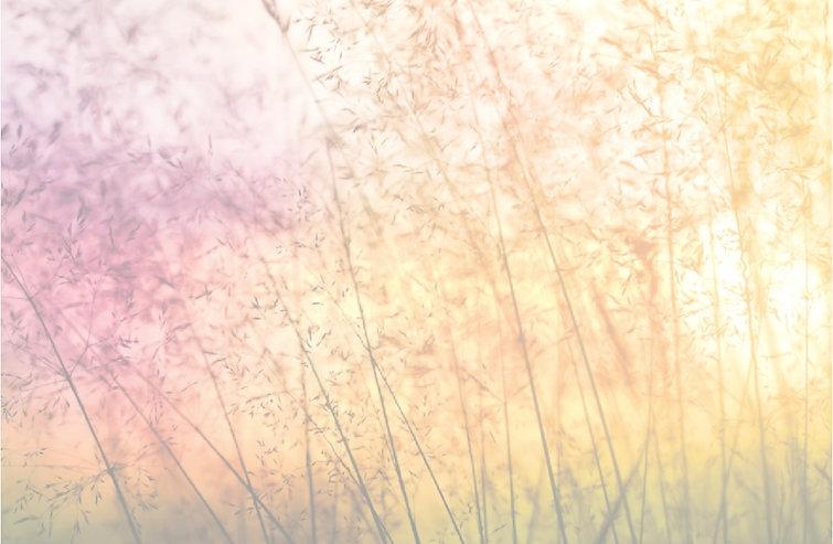 Nature's Delight 1 modifié.jpg