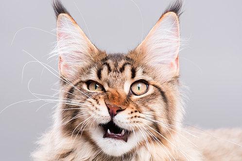 CBD Isolate Cat Treats