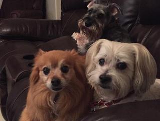 Three amigos - Strydor, Leggo & Luna