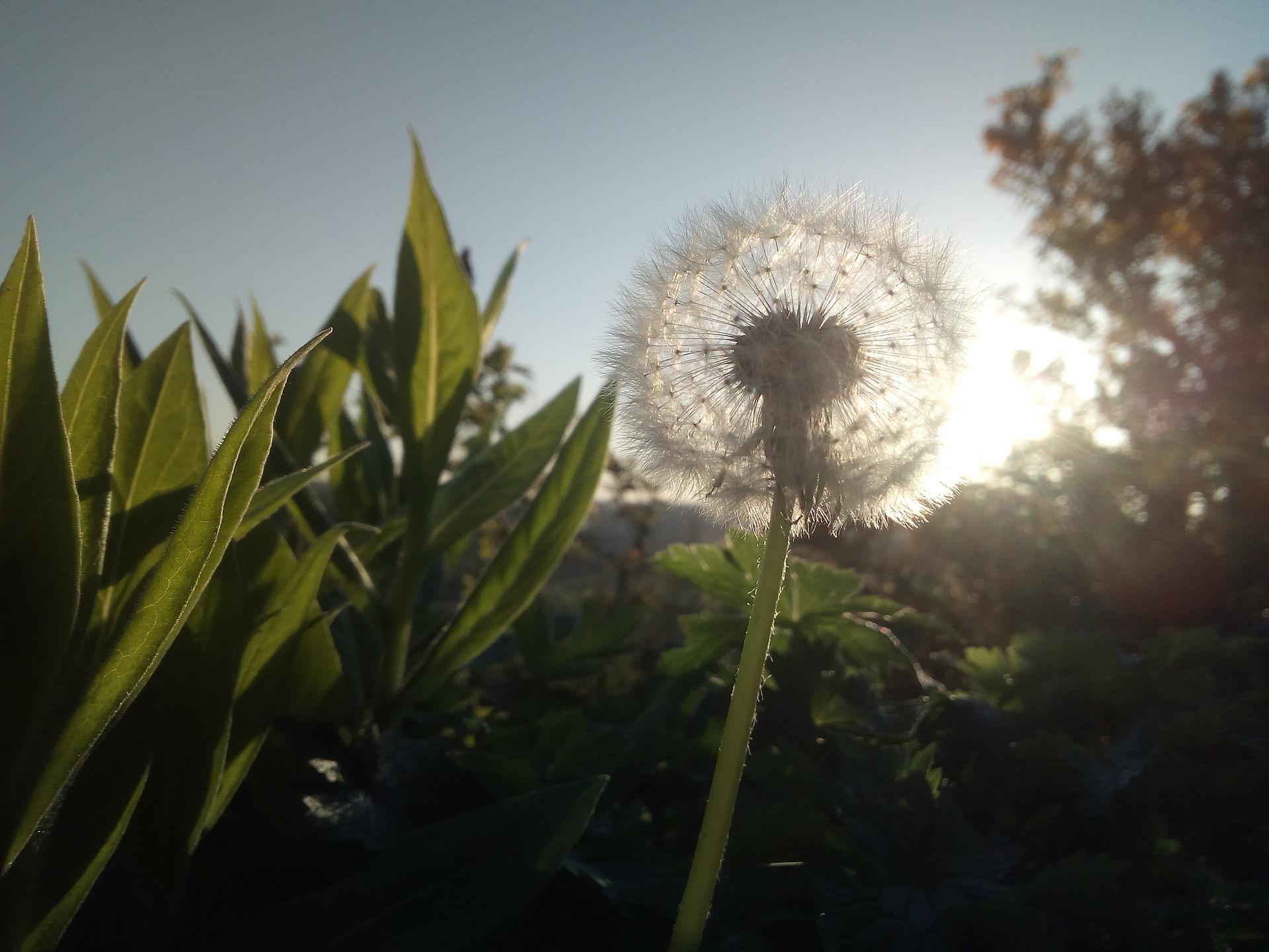 Le Reiki : Pour dire oui à la vie