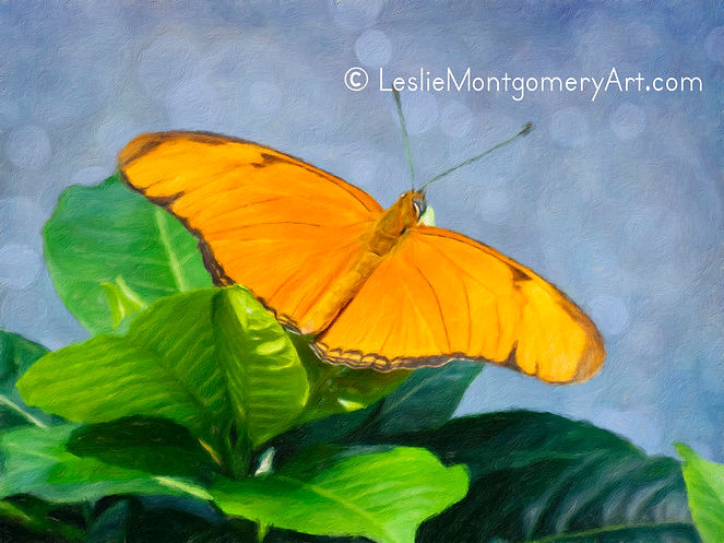 'Julia Butterfly - Orange Beauty' by Leslie Montgomery