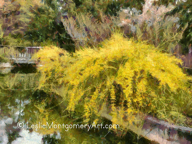 'Forsythia Wild And Free' by Leslie Montgomery