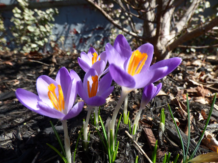 Could Spring Be On It's Way?
