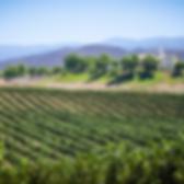 slo-vineyard-800x800.png