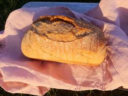 Wheat #2