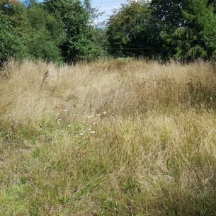 L'herbe d'un mètre de haut ?