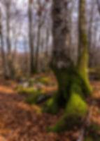 Portada-Paisaje-y-naturaleza.jpg
