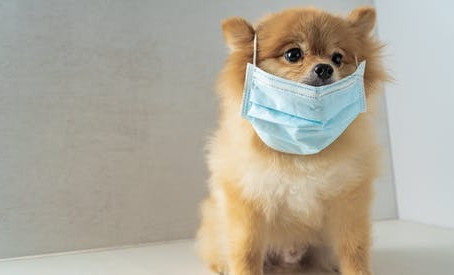 Design can help during COVID-19 pandemic: Veterinary Clinic design strategies