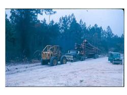 hauling timber.jpg