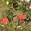 Thumbnail: TABLE ROSE
