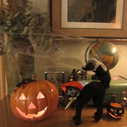Cat & Pumpkin.jpg