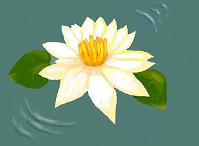shade - water lily.JPG