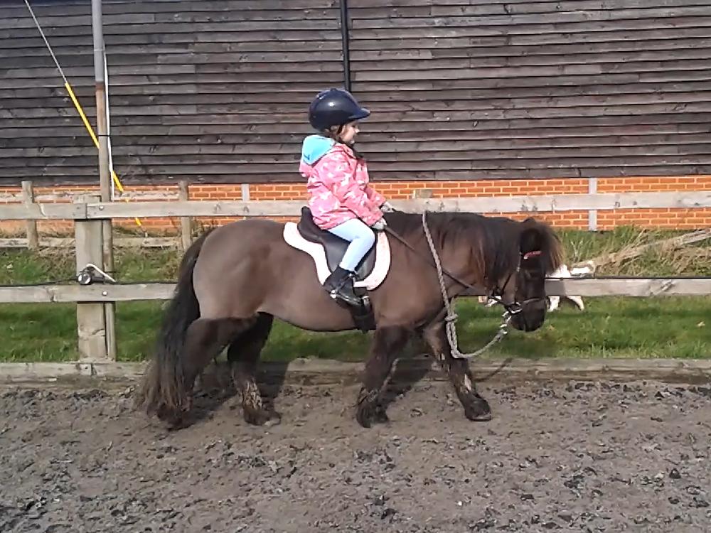 girl pony rider on Shetland