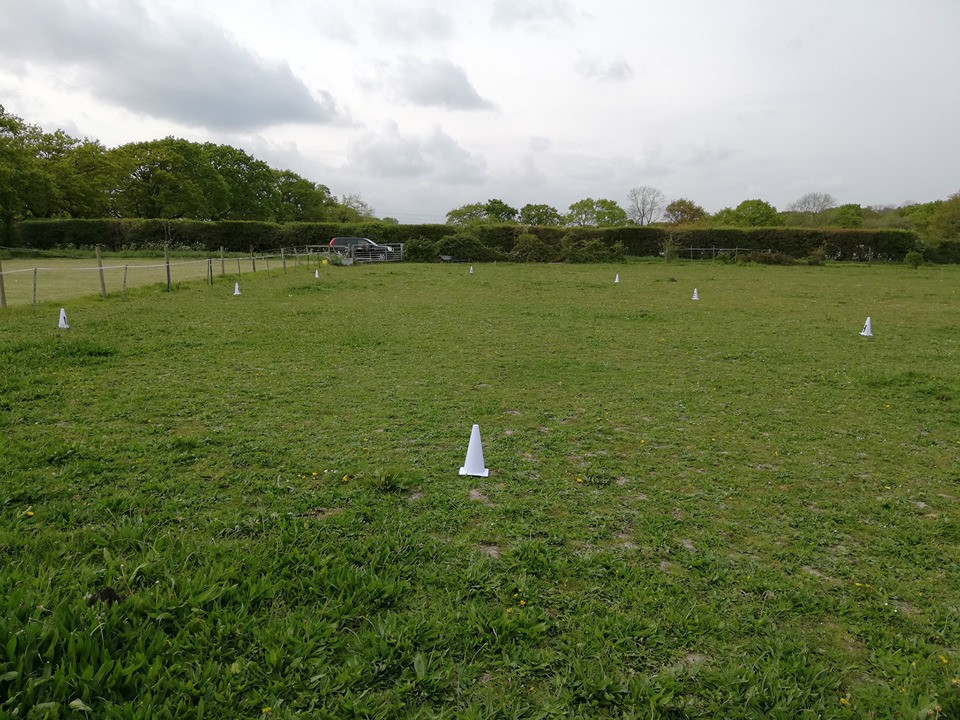 Simple grass dressage arena with cones