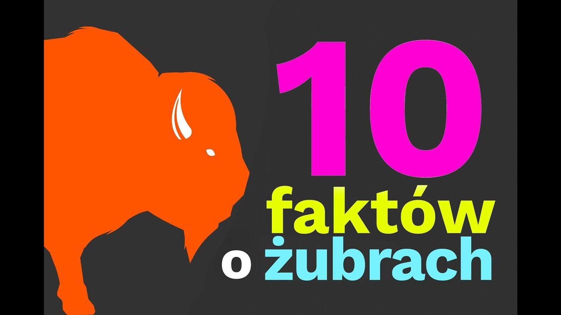 10 faktów o żubrach