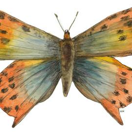 Golden Copper Butterfly