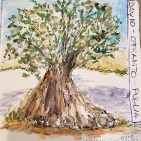 Ancient Olive Grove, Puglia