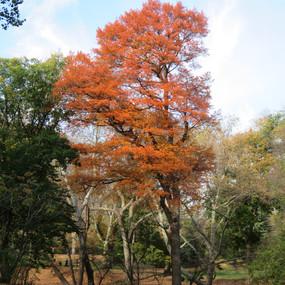 Fall in Central Park, NY
