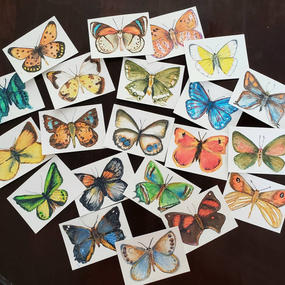 Small Butterfly Sketches