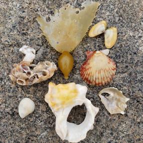 Beach Palette - Shades of Gold