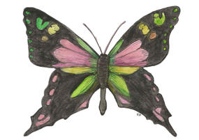 Purple Spotted Swallowtail, Graphuim Weiskei