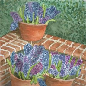 Hyacinths at Filoli