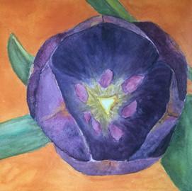 Kristin's Tulip
