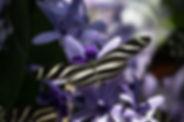 butterfly-4072574_640.jpg