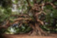olive-tree-3579922_640.jpg