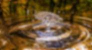 drop-3698073_640.jpg
