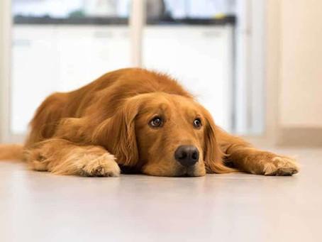 Hoe ziet mijn hondendag eruit? (Deel 3/3)
