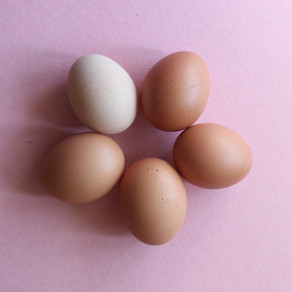 So you want healthy eggs?