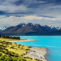 New Zealand-India-Shoots
