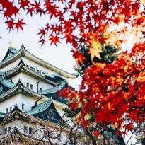 Japan-India-Shoots