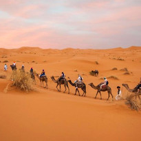 Morocco-India-Shoots