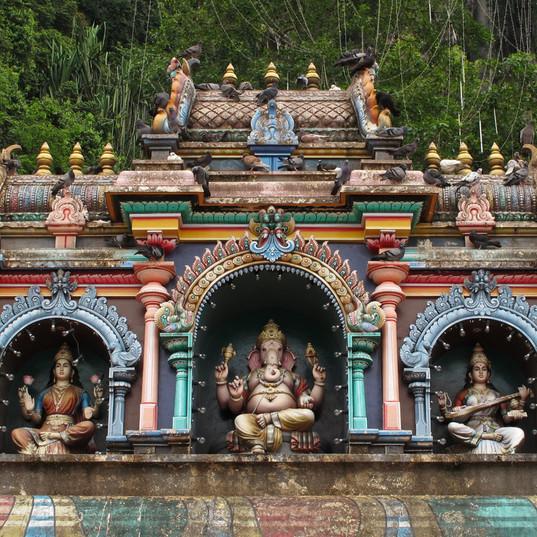 Malaysia-India-Shoots