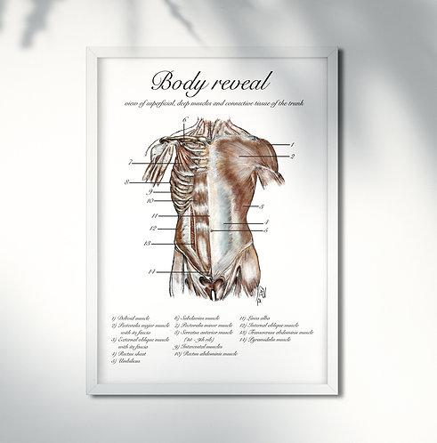 Body reveal