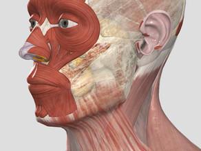 Vliv myofasciálních řetězců na dysfunkce čelistního kloubu(část druhá)