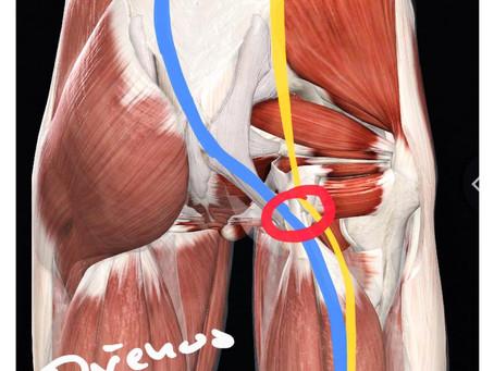 Pod Lupou: Tendinopatie & Funkční linie mezi hyždovými svaly a hamstringy