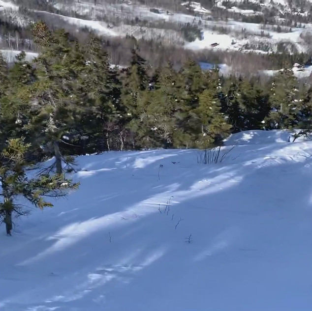 There's lots of tree skiing at Sunday River