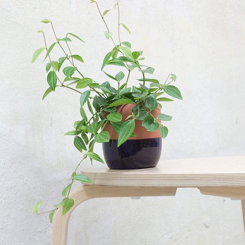 plantárium – Keramický květník osazený pepřincem