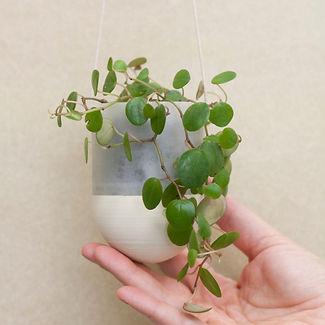 plantarium | závěsný květník PLA 7 cm