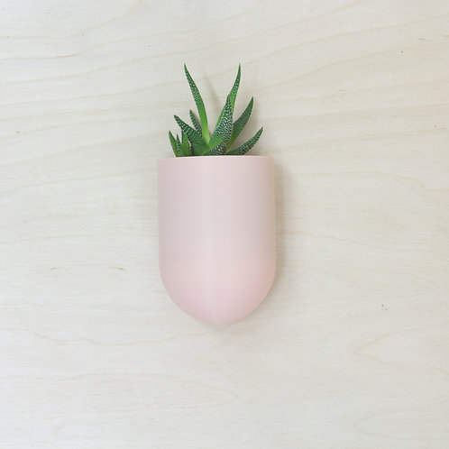 plantárium – Malý nástěnný květník s havorcií