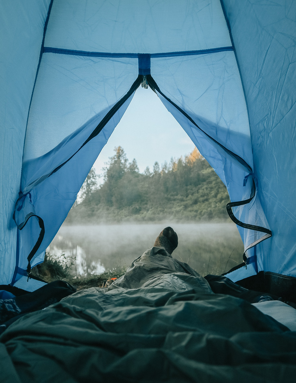mosquito in a tent