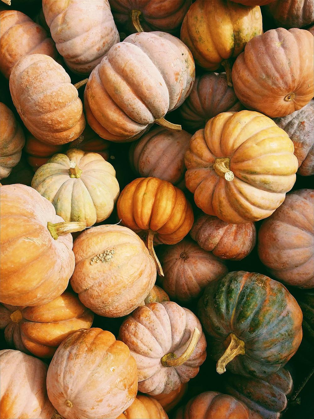 pumpkin pile orange
