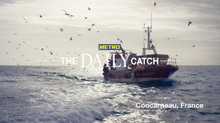 Metro | The Daily Catch